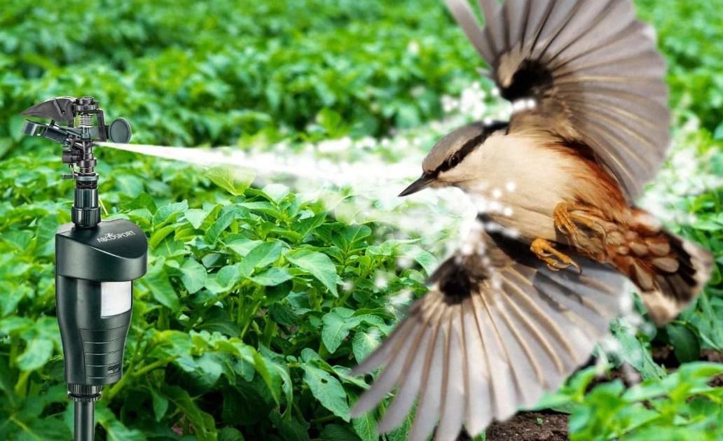 отпугиватели от птиц