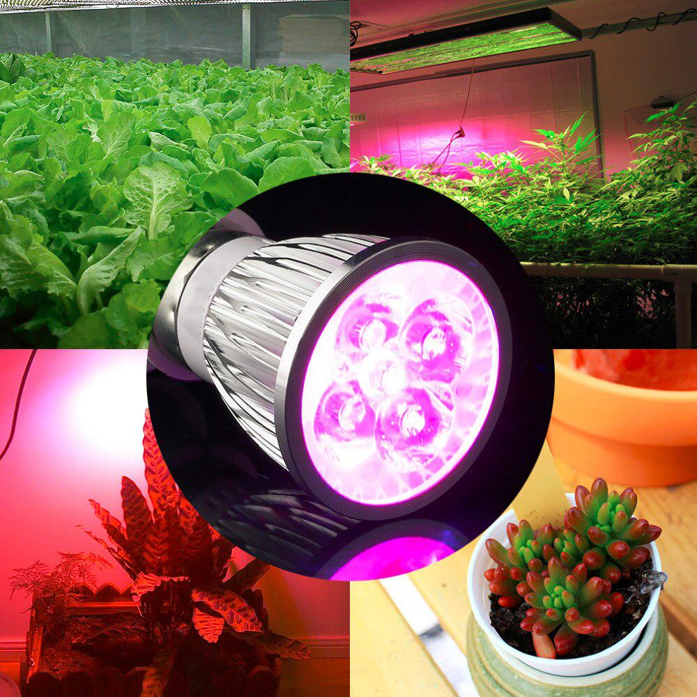 LED Gow Light 110w