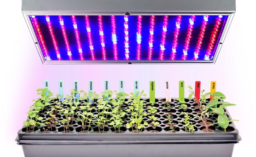 Рейтинг фитоламп для комнатных и тепличных растений